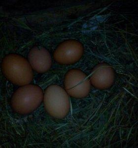 Вкуснейшие домашние яйца