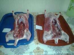 Мясо нутрий на заказ