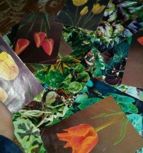 Картинки растений
