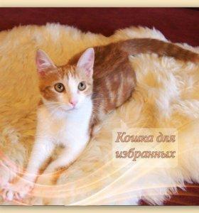Котёнок Иванка