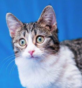 Расчудесная Фаня, 4 мес., очаровательный котенок