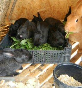 Кролики и мясо кролика.