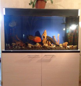 Аквариум с тумбой и с рыбками