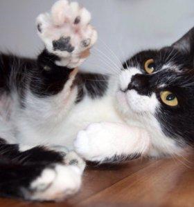 Кошка Мурли