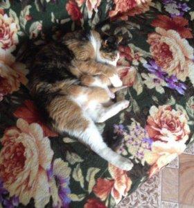 2 кошечки и 1 кот