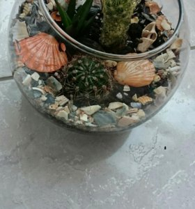 Флорариум суккуленты кактусы