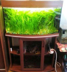 Рыбки с аквариум