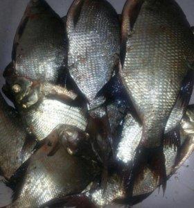 Свежая рыба-подлещик 40,судак 250,лещ 100,щука 100