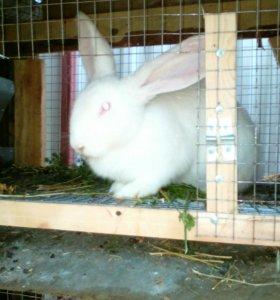 Кролики разных пород