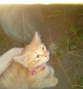Рыженький котик