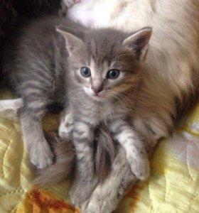 Отдадим котёнка в добрые руки!