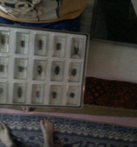 Продам колекцию насекомых не живые