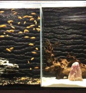 Аквариумная стойка Усиленная с 2 аквариумами