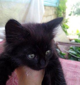 Котята милашки