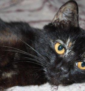 Кошка в добрые руки, котенок в дар Шерри
