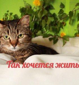 Кошка в добрые руки!