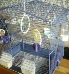 Парочка волнистых попугаев с клеткой