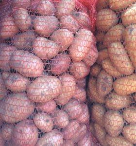 Картофель свежий