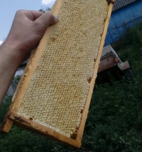 Сотовый мёд. Подсолнух