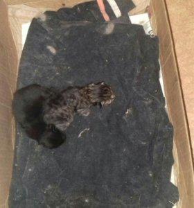 Два котенка-мальчик и девочка, отдам бесплатно