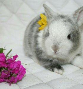 Бери кролик с клеткой.Питомник карликовых кроликов