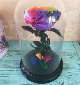 Роза в колбе. Разноцветная.