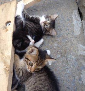 Ласковые котята в добрые руки