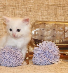 Пушистый комочек котик