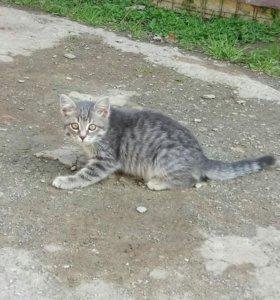 Котик в частный дом 3мес