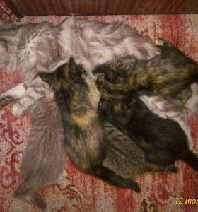 Котятя 2 месяца