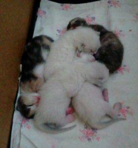 Отдам 5 котят