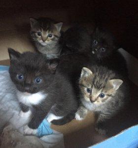 Мимишные котятки в добрые руки :)