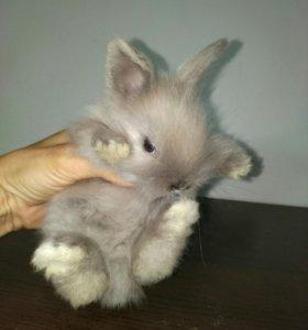 Декоративные кролики Зооцентр Меридиан