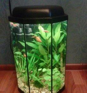 Восьмигранный аквариум