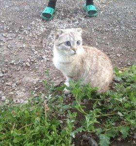 Кошечка Ася