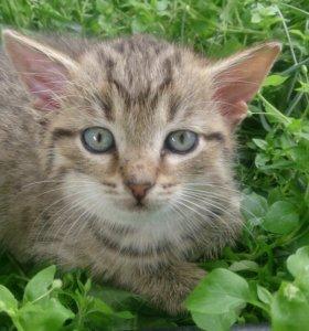 Кошка,потеряшка ищет дом