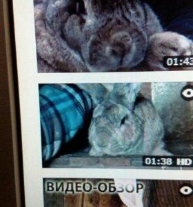 Кролики великана подрощеные