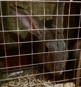 Кролики, крольчата, кролихи, кролы