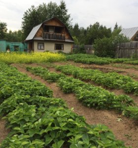 Участок, 427 сот., сельхоз (снт или днп)