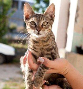 Кошечка Клавдия в добрые руки