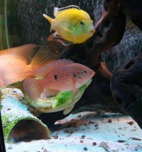 Продам аквариум на кованной подставке