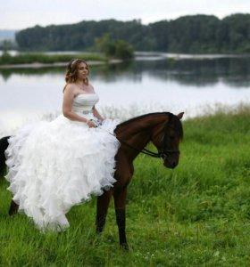 Предоставление лошадей для съемок