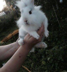 Продажа кроликов. Декоративные