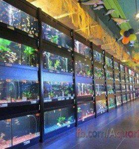 аквариумы и всё для них