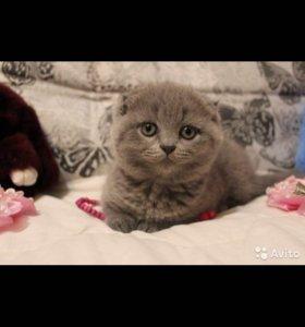 Плюшевые котята ищут заботливых родителей)
