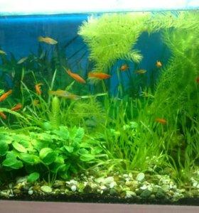 Аквариум 220 л, рыбки, растения, оборудование