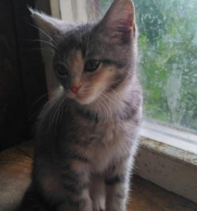 Котёнок Ванилька