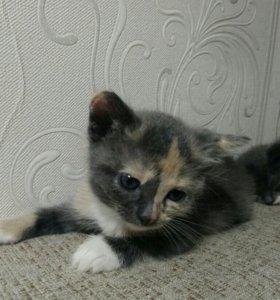Котенок в добрые руки! (Девочка)