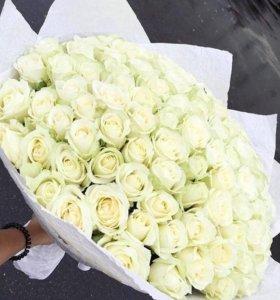 Белые Розы 51/101