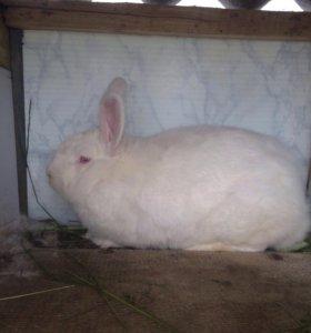 Мясо кролика и живьём